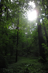 afternoon light (Molly Des Jardin) Tags: park trees light sky usa sun green leaves forest evening afternoon floor state bright pennsylvania branches sunny trunks 2014 undergrowth susquehannock drumore 43215mm