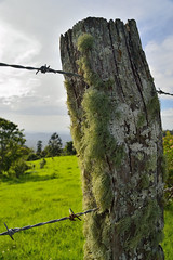 Been around a while (Robert J Wilson) Tags: fence moss wire nikon post weathered lichen barbed gnarled d3200