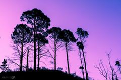 Desde Abajo (AGM Photo) Tags: sky mountain tree argentina colors silhouette amrica arboles duo paisaje ojos valley vista fields silueta sierras crdoba campos montaas valles airelibre sanagustin amricadelsur crdoba amrica