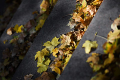 (monorail_kz) Tags: autumn leaves yellow grey maple steps foliage jupiter37a