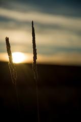 20150919-DSC_0703.jpg (Teivel) Tags: trees sunset summer sun sunlight tree beautiful woodland walking woods sunsrays d610 teivel