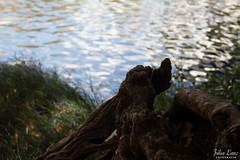 Chapada dos Veadeiros  GO (julialanz) Tags: natureza go vale dos jorge da lua bento cachoeira so chapada veadeiros goias