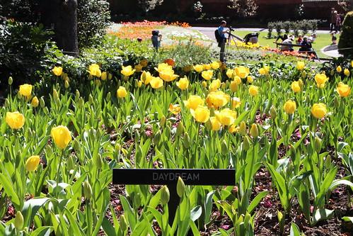 Thumbnail from Wellington Botanic Garden