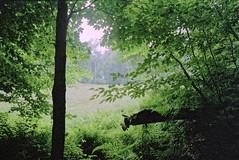 Loleta (joeldinda) Tags: tree film forest woods minolta kodak july 1999 scanned negatives pointshoot gold400 2989 kodakpremiumprocessing98
