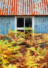 Overgrown (Elmer Duck) Tags: autumn skye scotland bracken oldpostoffice trotternish romesdal samsungnx30 samsung1650mmpz