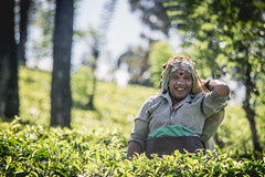 A smile is the prettiest thing to wear (Channed) Tags: asia azië ceylon littleengland nuwaraeliya pussallawa pussellawa serendib srilanka centralprovince woman lady tea teapicker teaplantation plantation portrait people localpeople local smile chantalnederstigt teaplucker teapicking teaplucking thee theeplukker theeplukster channedimages