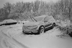 Scan-151130-0026 (Oleg Green (lost)) Tags: winter snow 400 province colorskopar fomapan 2535 hexarrf