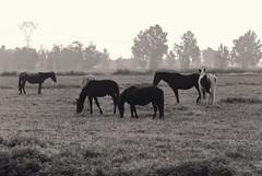 _DSC6146 (Nardulli Gio) Tags: cavalli altreparolechiave
