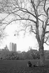 (a.cadore) Tags: nyc newyorkcity blackandwhite bw vertical zeiss landscape centralpark candid uptown fujifilm sanremo carlzeiss xt1 biogont2828 zeissbiogon28mmf28 fujifilmxt1