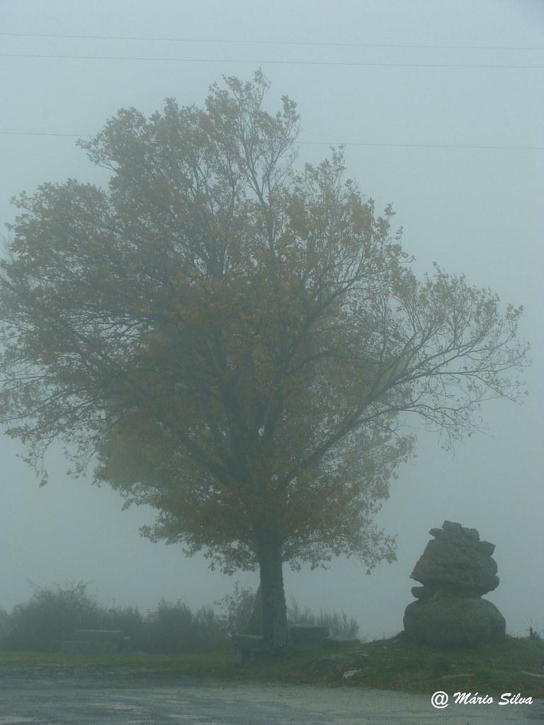 """Águas Frias (Chaves) - ... a névoa ... a árvore ... a """"fonte"""" ...- dez 12"""