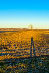 Shadow in Field (Jae at Wits End) Tags: blue light sky plant tree nature field rural landscape outside one alone shadows exterior view natural outdoor farm country scenic single crop lone remote solitary picturesque plain isolated singular bwshadows photochallenge2015
