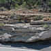 Quartzose sandstone (Kayenta Formation, Lower Jurassic; southeastern Colorado National Monument, Colorado, USA) 4