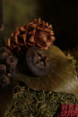 December 19 (zs_and_zs) Tags: christmas macro closeup cone adventwreath wreath zsuzs