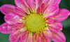 Macrography (NaveedBarq) Tags: blackandwhite flower macro blackbackground mac bokeh blacknwhite macrophotography macrography 100mmmacro flowersandplants flowercloseups macroshooting flowersleaf bokehbackground macroclicks flowerclicks
