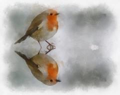 Christmas Robin (alanpeacock2) Tags: christmascard robin seasonsgreetings merrychristmas painting watercolour birds winter art
