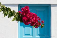 DSC07629_s (AndiP66) Tags: sigma24105f4 thira egeo griechenland gr bougainvillea blue white blau weiss blumen flowers door tre firostefani santorini santorin thera greece cyclades kykladen caldera aussicht view september 2016 hellas ellada sony sonyalpha 7markii 7ii 7m2 a7ii alpha ilce7m2 sigma24105mmf4dghsmart sigma 24105mm amount laea3 andreaspeters