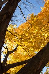 Golden jungle5_MG_1332 (CFurjanic93) Tags: pennstate pennstateuniversity trees fall fallsession stude students college collegecampus bikes sun warmth foliage sky bikerack golden yellow orange