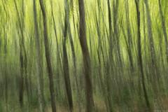394 - At the forest (Ata Foto Grup) Tags: forest green türkiye istanbul belgrad ormanı turkey movement motion blur hareketli hareket art sanat