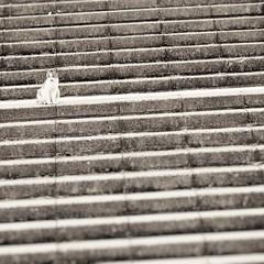 (Jon-F, themachine) Tags: jonfu 2016 olympus omd em5markii em5ii em5mkii em5mk2 em5mark2  mirrorless mirrorlesscamera microfourthirds micro43 m43 mft ft     snapseed japan  nihon nippon   japn  japo xapn asia  asian fareast orient oriental aichi   chubu chuubu   nagoya  outdoors  animal animals   fauna cat cats   kitty kittycat kitties stray strays pussycat pussycats puddytat neko  nyanko