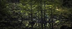 Halcyon (keith_shuley) Tags: redbudisle peaceful green panorama ladybirdlake austin texas