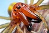 Sac-spider Portrait (johnhallmen) Tags: arachnid spider canon760d canonmpe65 canon270ex