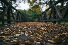 _DSC4152 (ALX-PHOTOGRAPHIE) Tags: automne autumn evening soir soire angers france arbres feuilles leaves