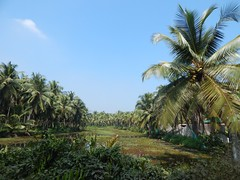 Villages Near Calicut Kerala Photography By CHINMAYA M (15)