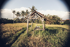 Rice Field Housing (Susi Supertramp) Tags: bali indonesia travel sunshine summer palmtrees indo asia surfing surfergirl dreaming dreamer daydreamer traveler earthling oceanlover lover lovemore staygolden photography photographymatters nature beach beachlife seaside ocean
