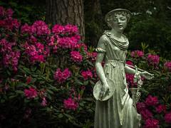 Rhododendron (olipennell) Tags: blte botanischergarten mnchen nymphenburg pflanze rhododendron skulptur statue bayern deutschland de blossom munich sculpture