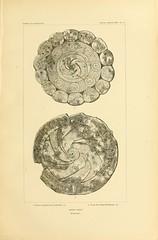 n168_w1150 (BioDivLibrary) Tags: antiquities indianart indians shellsinart smithsonianlibraries bhl:page=11258769 dc:identifier=httpbiodiversitylibraryorgpage11258769 manyhatsofholmes joseph jones artist:name=katecliftonosgood taxonomy