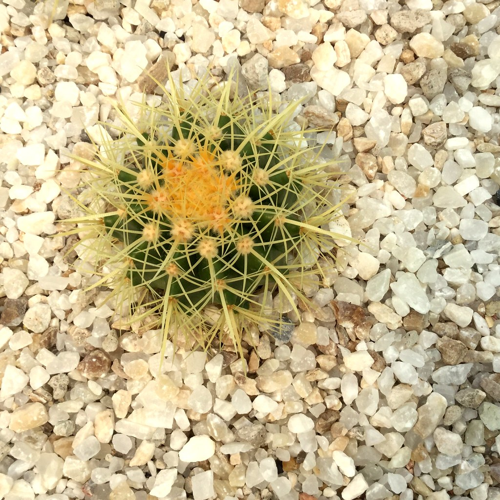 The Worlds Best Photos Of Cactus And Seco Flickr Hive Mind - Cactus-seco