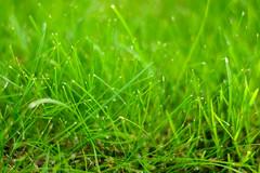 Greenness (Michaela Loheit) Tags: green grass