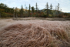 Wetland in autumn (Teruhide Tomori) Tags: landscape nagano japan frost nature wetland morning          autumn  norikura