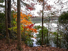 Color by the Lake (gwshamb) Tags: autumn landscape virginia nature color woods leaves fallcolor lake fall trees light