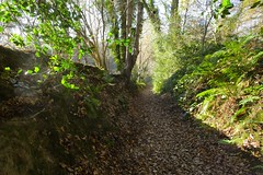 Woodland Walk @ Ightham Kent (Adam Swaine) Tags: paths woodland woodlandfloor trees ighthammote ightham leaves ukcounties kent kentweald canon swaine winter english rural england britain
