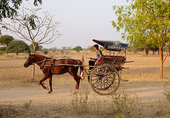 Horse cart on dusty road in Bagan (phuong.sg@gmail.com) Tags: archeology architecture art asia asian attraction bagan buddhism buddhist burma burmese carriage cart culture dirt exploring heritage horse landmark myanmar pagoda religion religious revered road serene sightseeing southeast stupas temple theravada tour tourism tourist tourists tradition traditional tranquil travel wagon worship