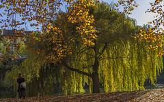October mood at Neckar (KF-Photo) Tags: 1610 gegenlicht neckar neckarklaus oktoberstimmung platanenallee staunendeschnheit tbingen weide