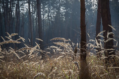 Magic (η●я) Tags: magical places forest trees field dof canon lights sunlight bokeh shadow tree closeup nature outdoor