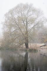 Tree (mellting) Tags: eskilstuna platser vilsta bloggad flickr instagram matsellting mellting nikon nikond7000 sigma70300456 sverige sweden tree mist landscape fall autumn willow pil salix
