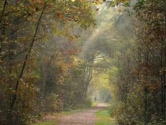 Walking in an autumn scape (joeke pieters) Tags: 1310250 panasonicdmcfz150 herfst herbst autumn fall automne licht light landschap landscape landschaft paysage platinumheartaward
