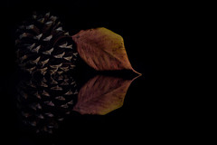 Pinecone and Cherry Leaf (KellarW) Tags: autumnleaf autumn onblack colorful fallcolors autumncolors pinecode fall cherryleaf colorfulfoiliage
