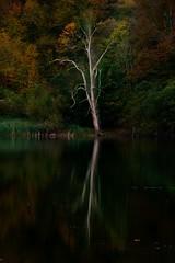 (iban pagalday) Tags: udazkena otoño autumn kolore color ura agua water islada reflejo reflection zuhaitza árbol tree natura naturaleza nature paisaia paisaje landscape iban pagalday