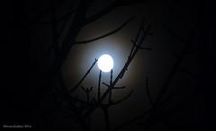 Trshavn 17.11.2016 kl. 02.50 (Marita Gulklett) Tags: froyar frerne faroeislands trshavn streymoy panasoniclumixdmcfz150 maritagulklett mnin mnen moon