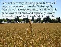 Galatians 6:9-10 (Martin LaBar) Tags: poster galatians6910 goodworks reaping wheat harvest