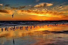 Entardecer por aqui... (Zéza Lemos) Tags: algarve água aves areia asas amistad portugal pordesol praia puestadelsol entardecer finaldedia sol sunny sunset selvagem nuvens núvens dunas reflexos reflections vilamoura