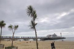 Palm trees (Tony Shertila) Tags: 20161027144020 europe britain england dorset poole coast town pier landmark beach weather day clouds cloudy sky outdoor bournemouth gbr geo:lat=5071536016 geo:lon=187847436 geotagged unitedkingdom westbourneandwestcliffward