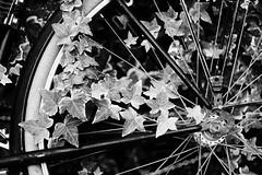 quand la nature reprend ses droits (glookoom) Tags: bw blanc blackandwhite black monochrome noiretblanc noir lumire light contraste plante vlo bike mtal