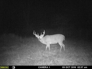 Kentucky Whitetail Hunt 26
