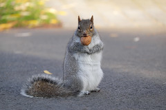 Squirrel (Space is a lonely town) Tags:
