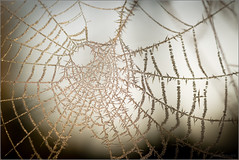 Warm-cold web (mikeyp2000) Tags: crystal sun backlit macro crystals closeup a99ii backligh sunlight frost web cobweb ice